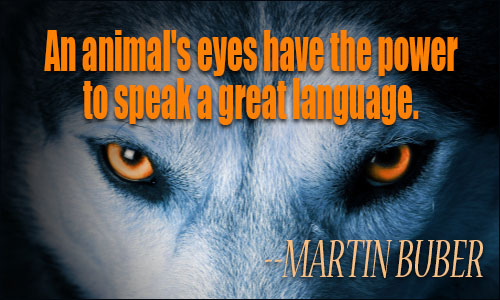 Animals Quotes Gorgeous Animals Quotes