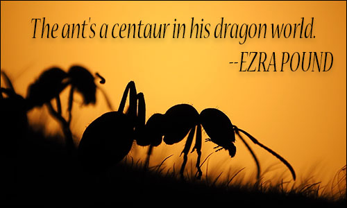 Ants quotes ccuart Choice Image