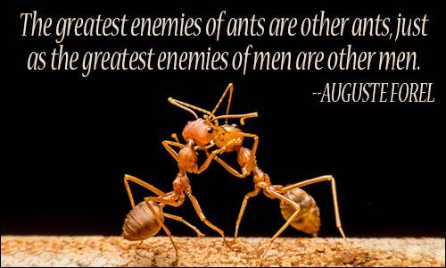ants_quote_2.jpg