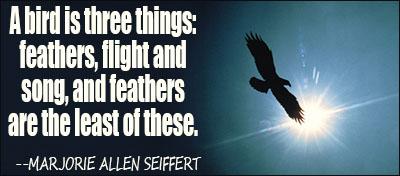 Birds Quotes Fascinating Bird Quotes