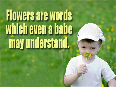 Flower Love Quotes Glamorous Flower Quotes